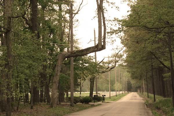 Hanging Tree - Tunis Mills