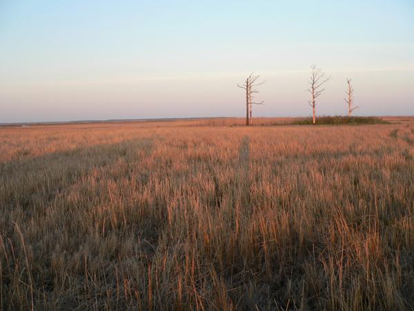 Greenbriar Swamp - haunts of Big Lizz