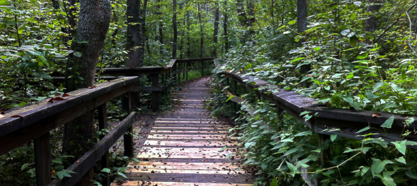 Path into the Pocomoke Forest
